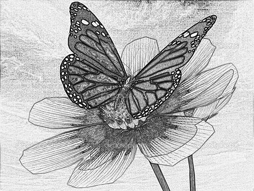 Butterfly On Flower Drawings In Pencil 3D Butterfly ...