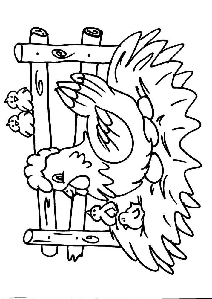 disegni animali da colorare:gallo-gallina-pollo-pulcino:i ...