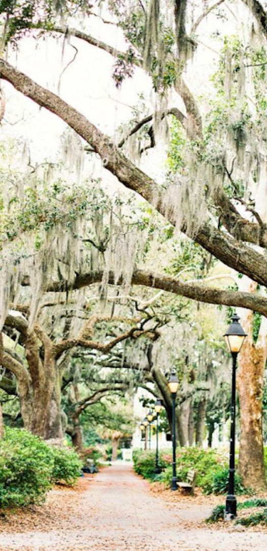Magnolia Plantation And Gardens Savannah Ga