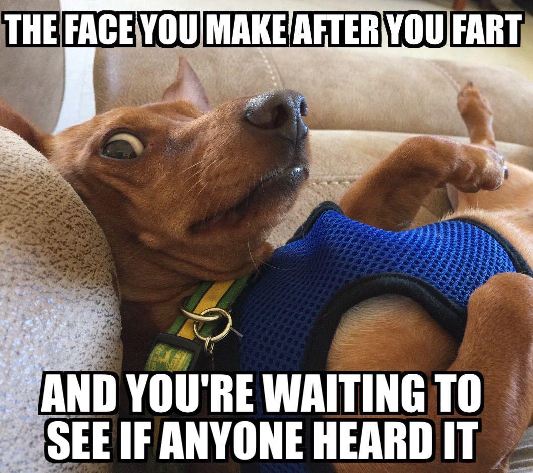 Gumby Weinniedog Dachshund Mybaby Funny Dog Jokes Cute