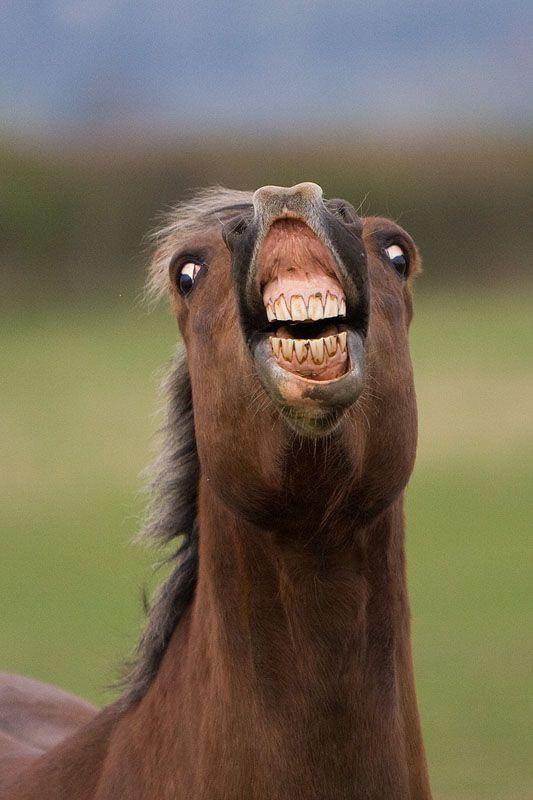 面白い動物馬