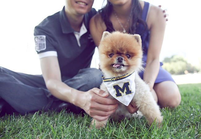 22 Engagement Photos With Dogs That Will Melt Your Heart -  22 Engagement Photos With Dogs That Will Melt Your Heart   Photo by: Vivian Sachs Photography   The - #Dogs #Engagement #EngagementPhotosafricanamerican #EngagementPhotosbeach #EngagementPhotoscountry #EngagementPhotosfall #EngagementPhotosideas #EngagementPhotosoutfits #EngagementPhotosposes #EngagementPhotosspring #EngagementPhotoswinter #EngagementPhotoswithdog #Heart #Melt #Photos #summerEngagementPhotos #uniqueEngagementPhotos