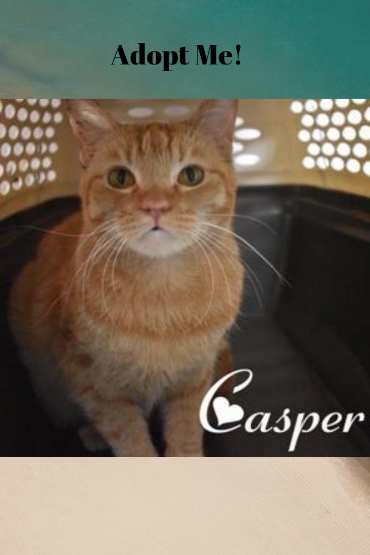 Casper Is Available For Adoption Pretty Cat Kitty Cat Orange