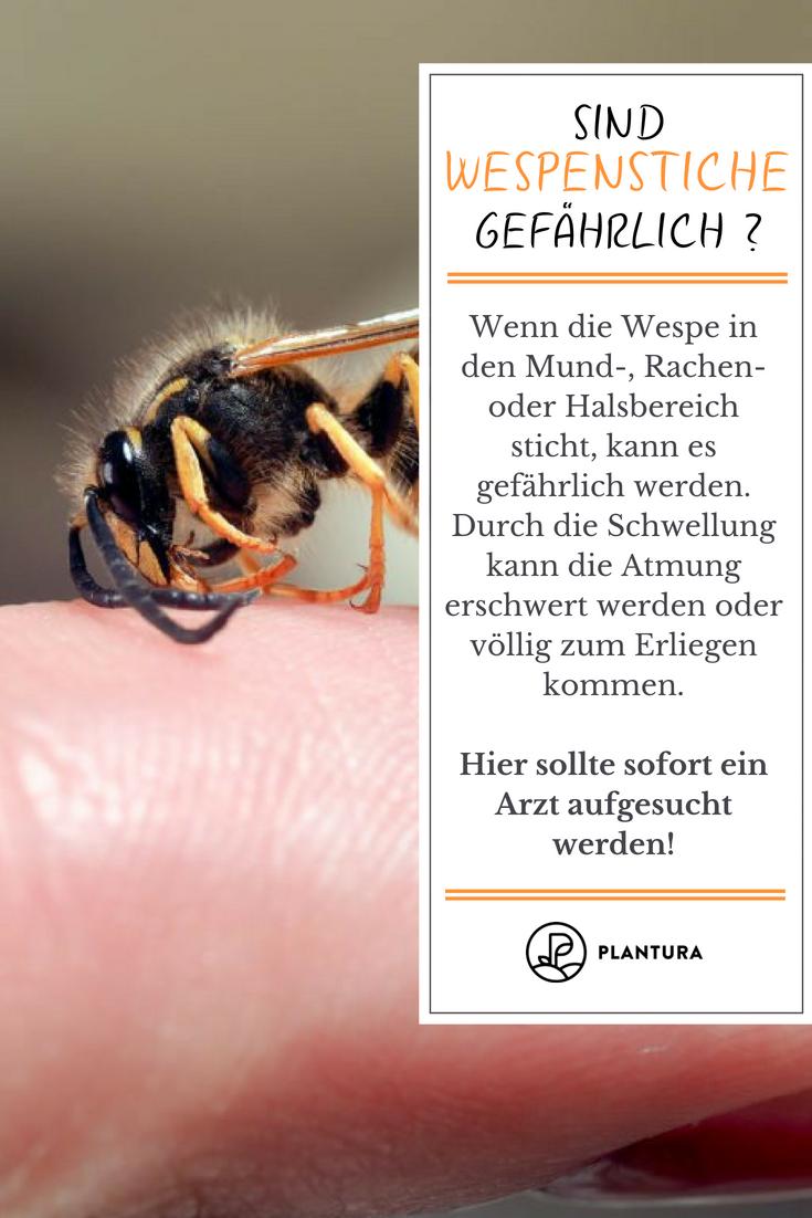 Wespenstich Wie Man Ihn Vermeiden Und Behandeln Kann Mit Bildern Gartentipps Garten Gartenarbeit