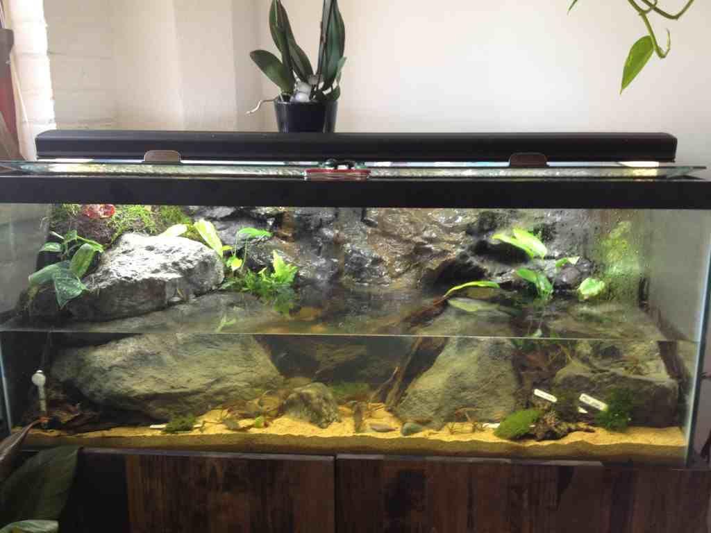 Borneo stream biotope. Biotope aquarium, Vivarium, Pet fish