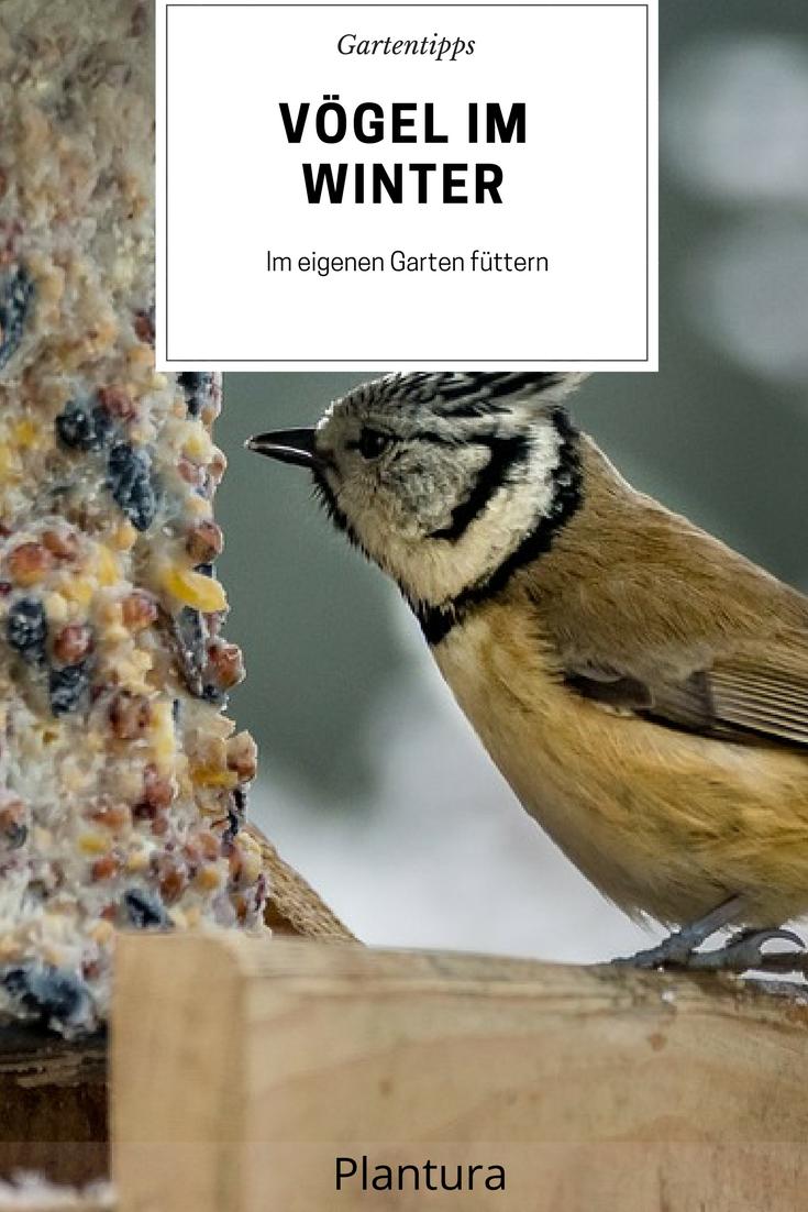Sollte man Vögel im Garten füttern? | Garten and Gardens