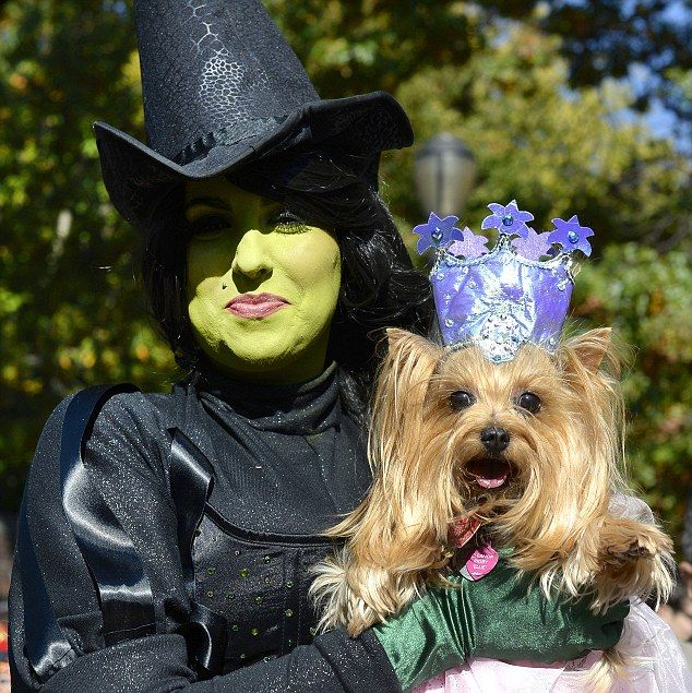 Pawsitively' adorable: Hundreds of pups dress up for America's ...