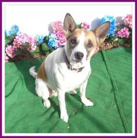 MAGGIE-FRIENDS OF SHELTER ANIMALS FOR COBB COUNTY 1060 Al Bishop Drive Marietta, GA 30008 ckersey533@aol.com