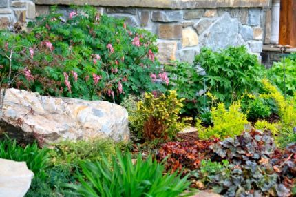 Boulders make a great focal point. Add them around the yard instead of more plants.
