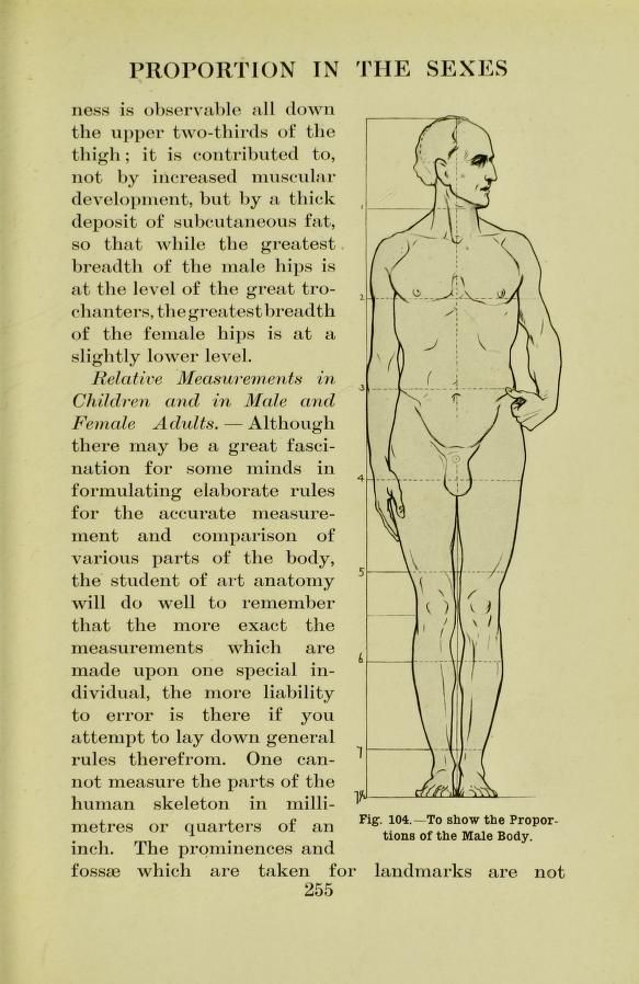 Proportions Of The Male Body From Human Anatomy For Art Students