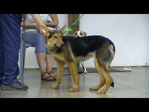 Agonizing Dog Training Center Dogsandpals Ropedogcollar Pull