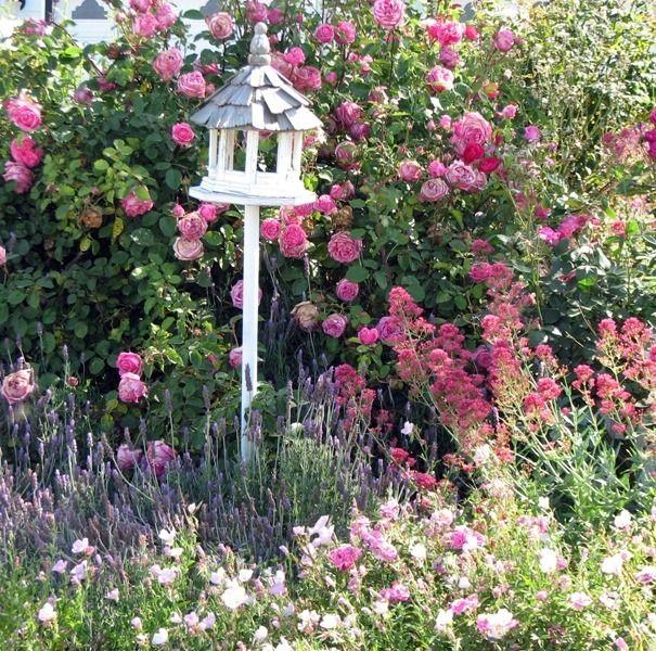 Simple Rose Garden: Bird Gazebo In Rose Garden