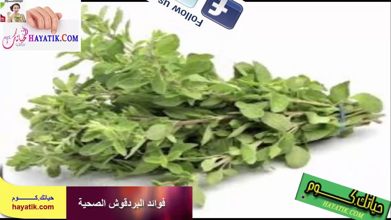 فوائد المرامية للحمل Vegetables Spinach Food