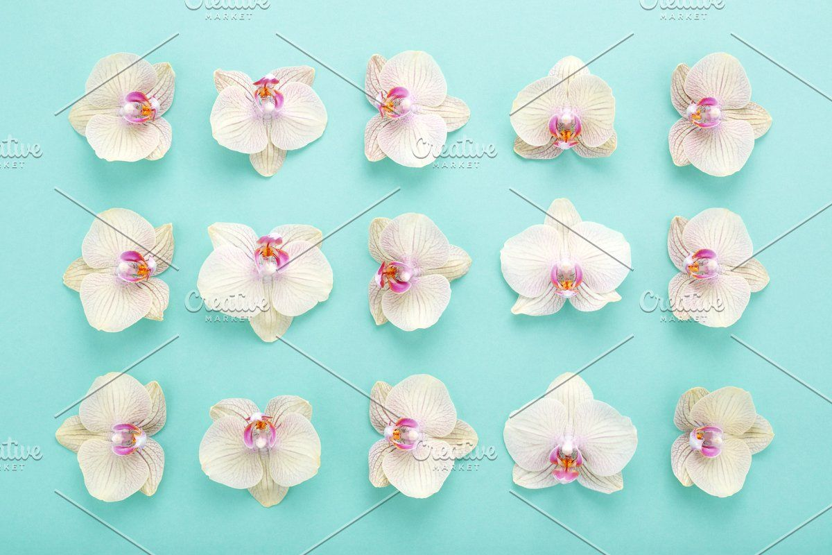 Pattern Of Orchids Flowers On Blue In 2020 Orchid Flower Orchids Flower Patterns
