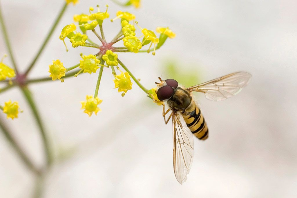 how to attract bees to pollinate