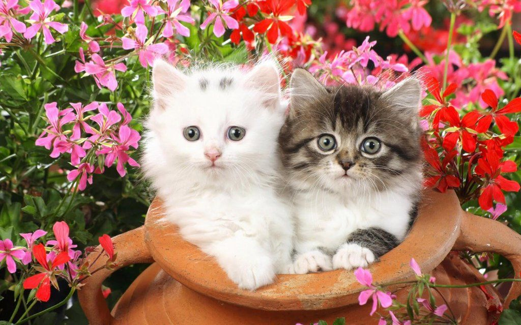 Beautiful wallpaper cats pictures