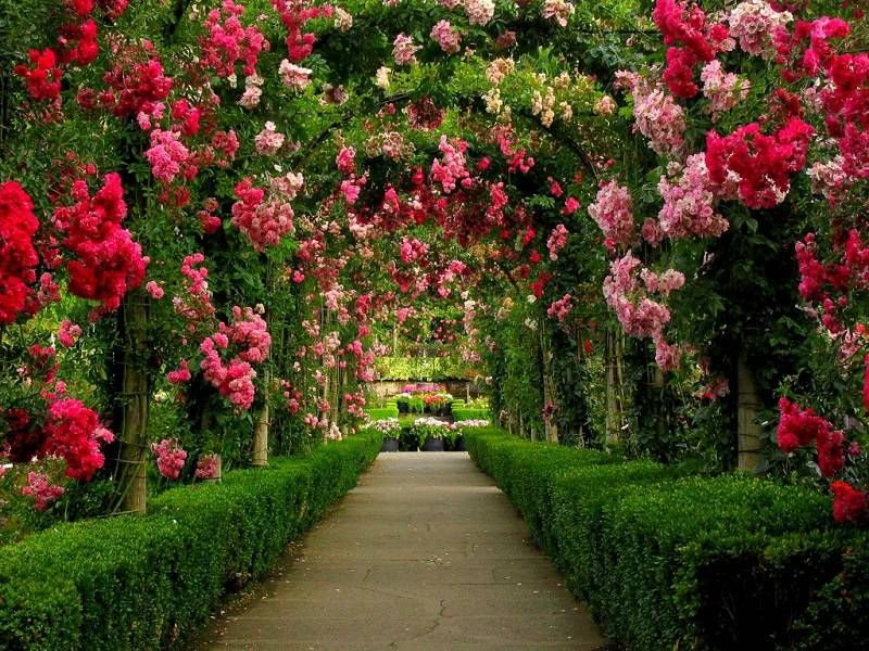 Beautiful Flower Gardens Of The World gardens-around-the-world-butchart-gardens-walkway | walkways
