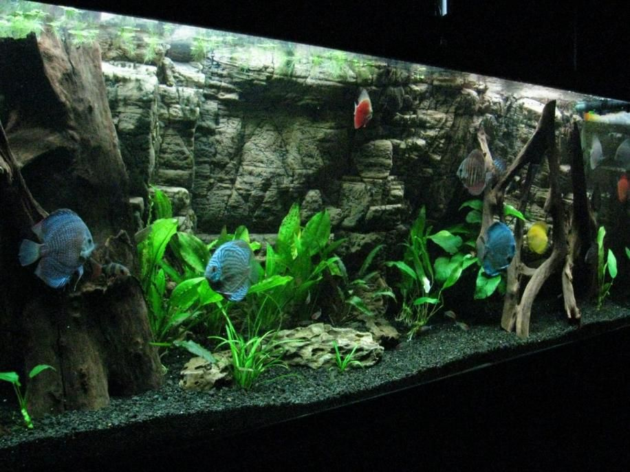 Discus tank with very nice background 3d background for Fish tank background ideas