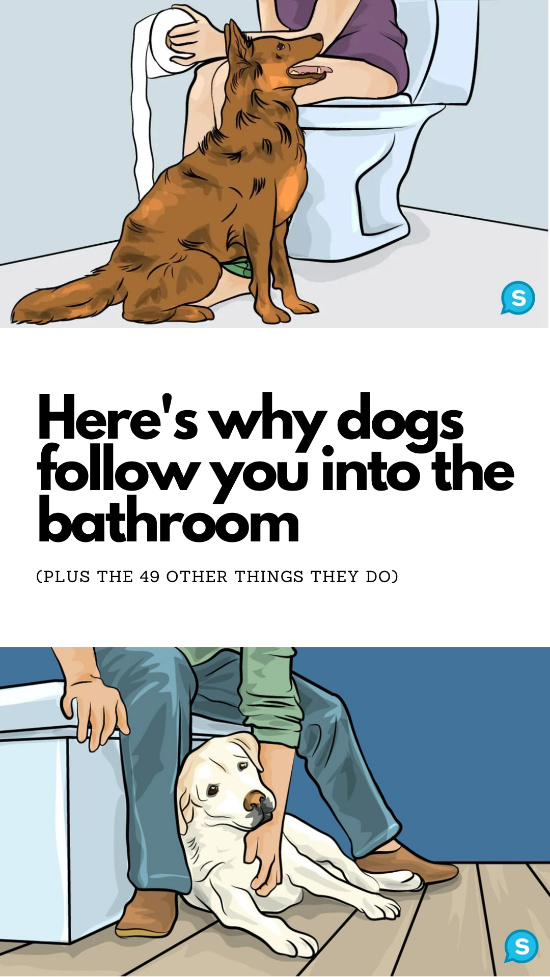 50 Various Dog Behaviors And What They Mean When They Do Them In 2020 Dog Behavior Dog Remedies Dog Body Language