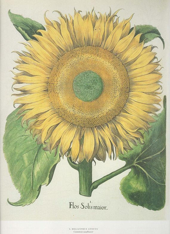 sale buy 3 bookplates at regular priceget the 4th for free just write the plate numbers or flower name of the fourth page in the notes section at