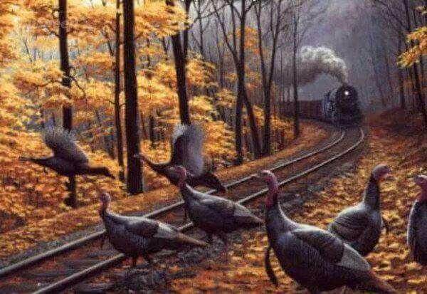 Wild Turkey scene