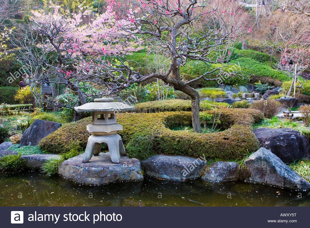 Japanese Garden With Flowering Plum Trees And Stone Lantern In