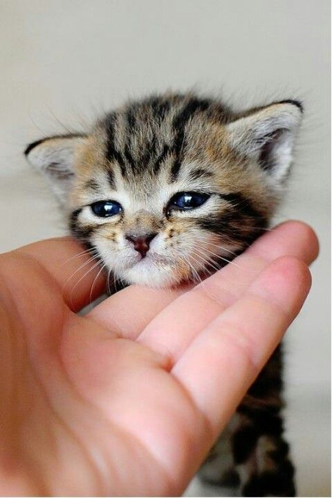 Cuteness at your fingertips Cute cats and kittens, Cute cats