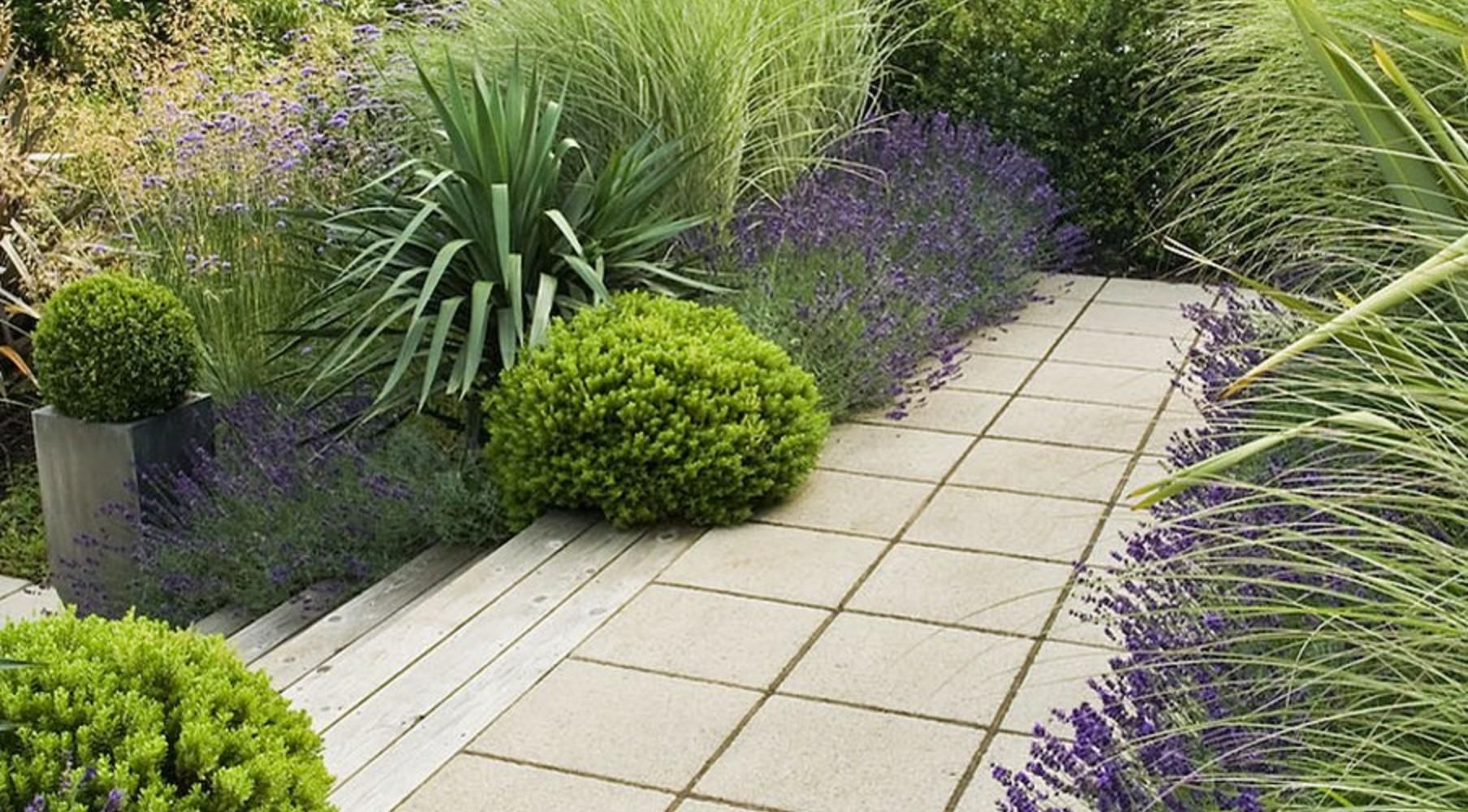 Garden design with lavender verbena bonariensis boxwood for Planting plans with grasses