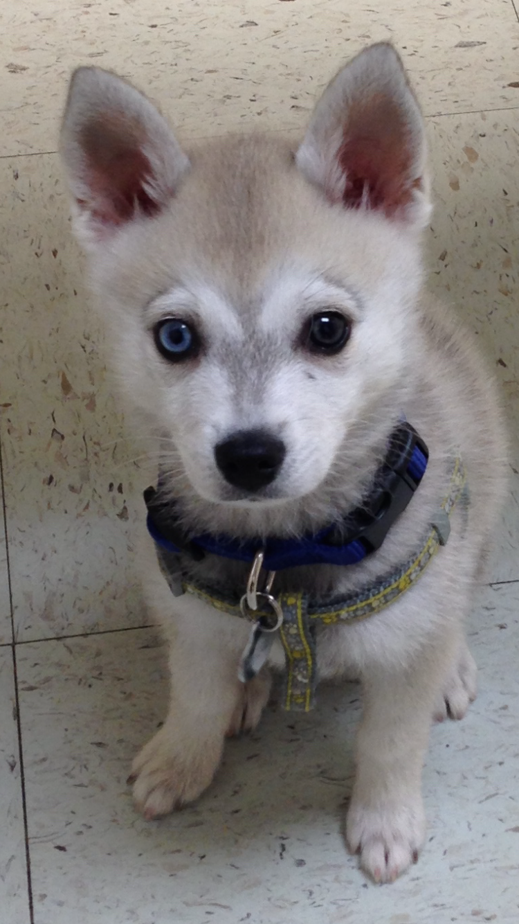 Tycho at 10 weeks - the eyebrows make me laugh. They went away for a while, but now they are coming back.