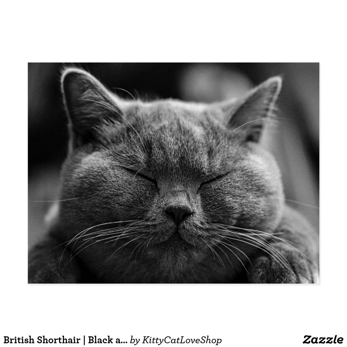 British Shorthair Black and White Cat Portrait (With