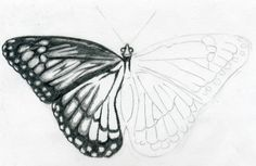 butterfly drawing easy methods how to draw butterflies - 1018×663
