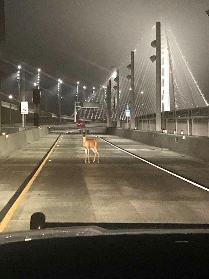 Stopped At Toll Buck Short Lol Bay Bridge San Francisco San Francisco Bay Area Treasure Island