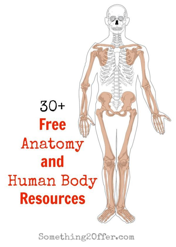 Free Anatomy And Human Body Resources Unit Studies Human Body