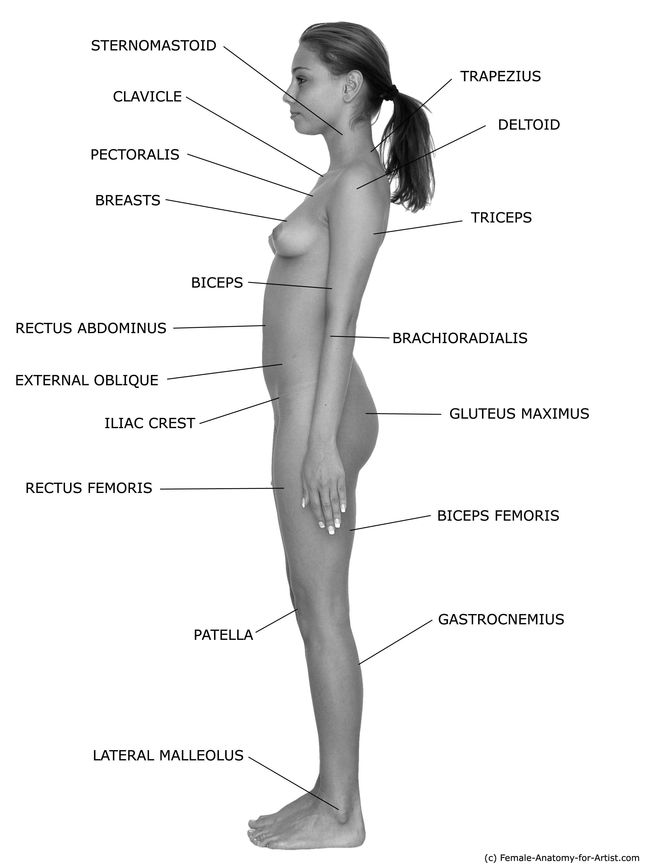 Female Anatomy Reference IV   References for Human female body ...