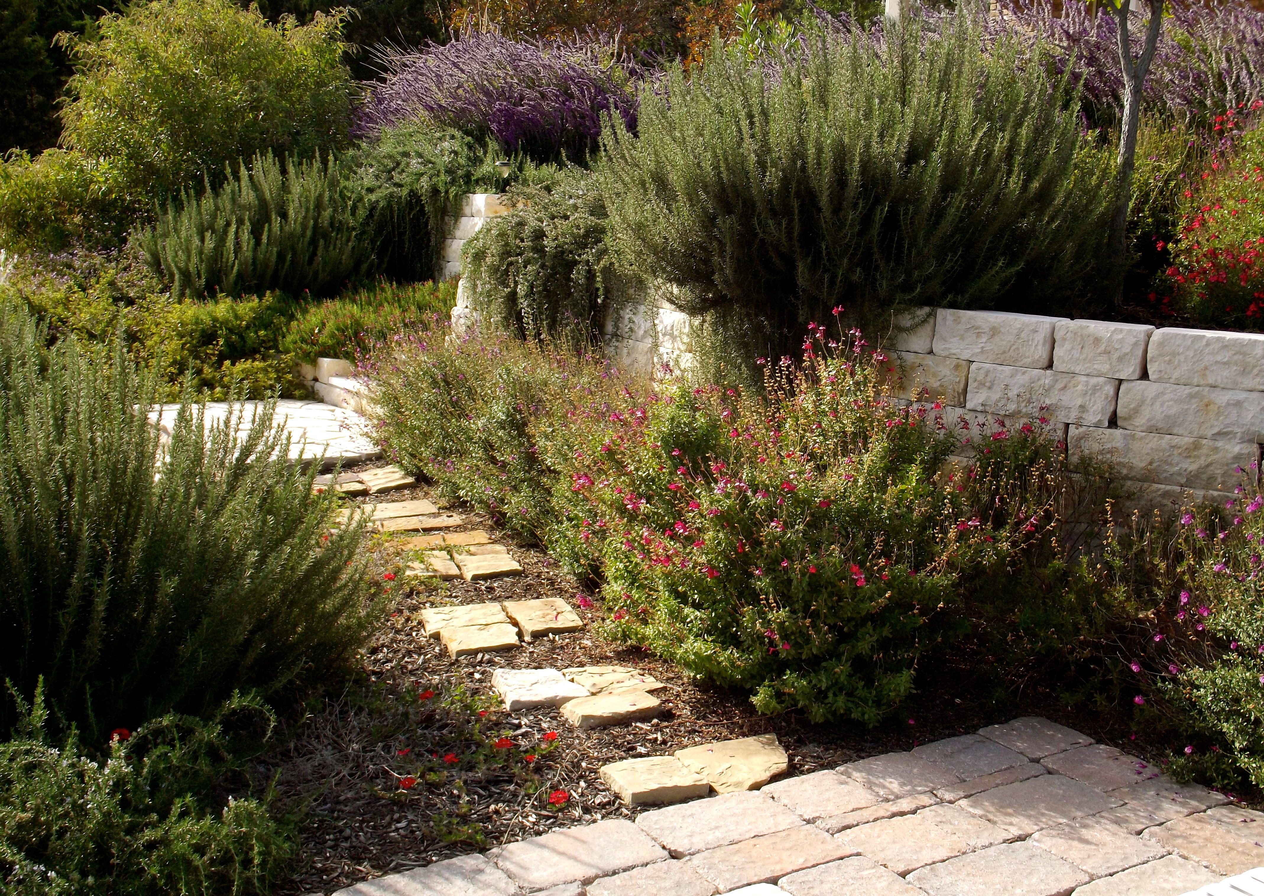 Burroughs Landscape, Kerrville Texas | Gardening | Pinterest ...