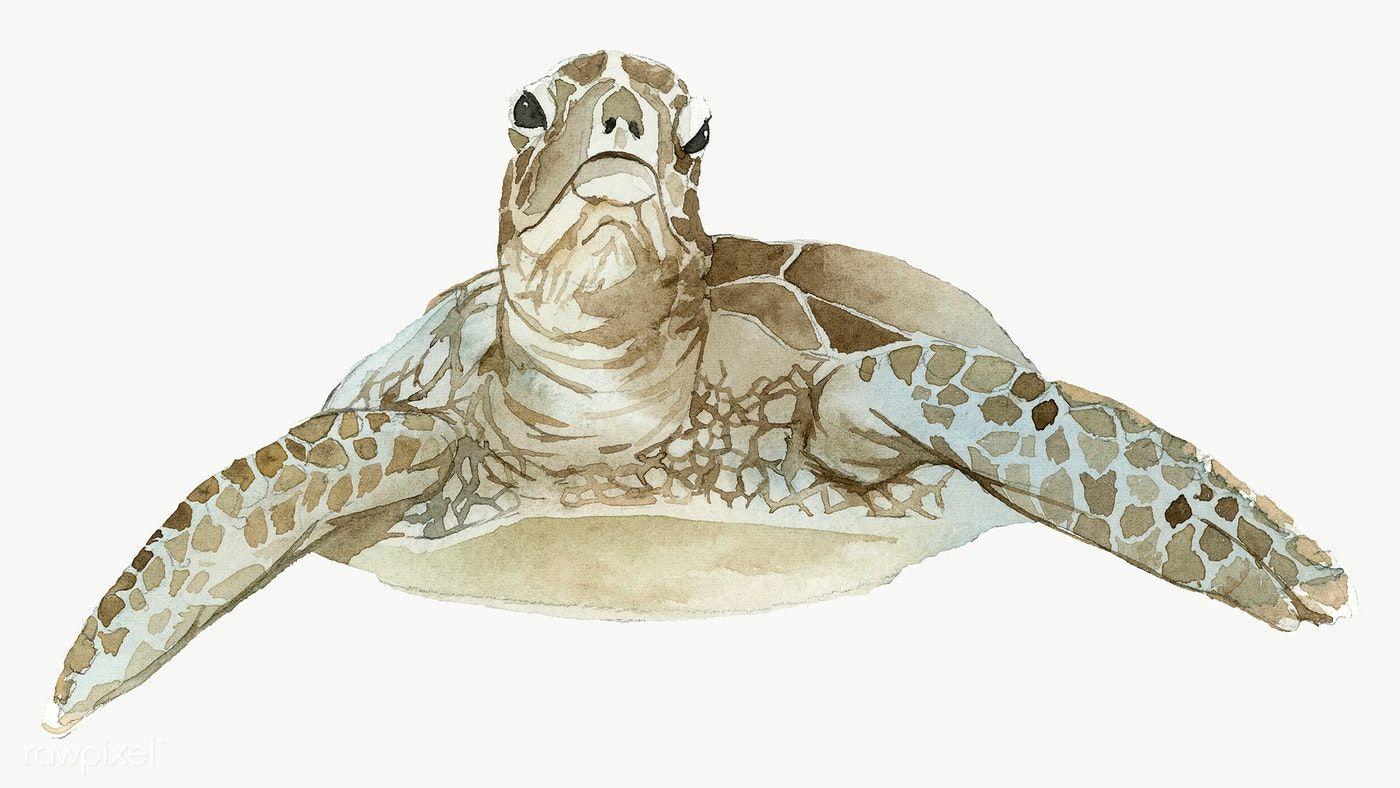 Watercolor Painted Sea Turtle Transparent Png Premium Image By Rawpixel Com Niwat Turtle Watercolor Watercolor Whale Watercolor Sea