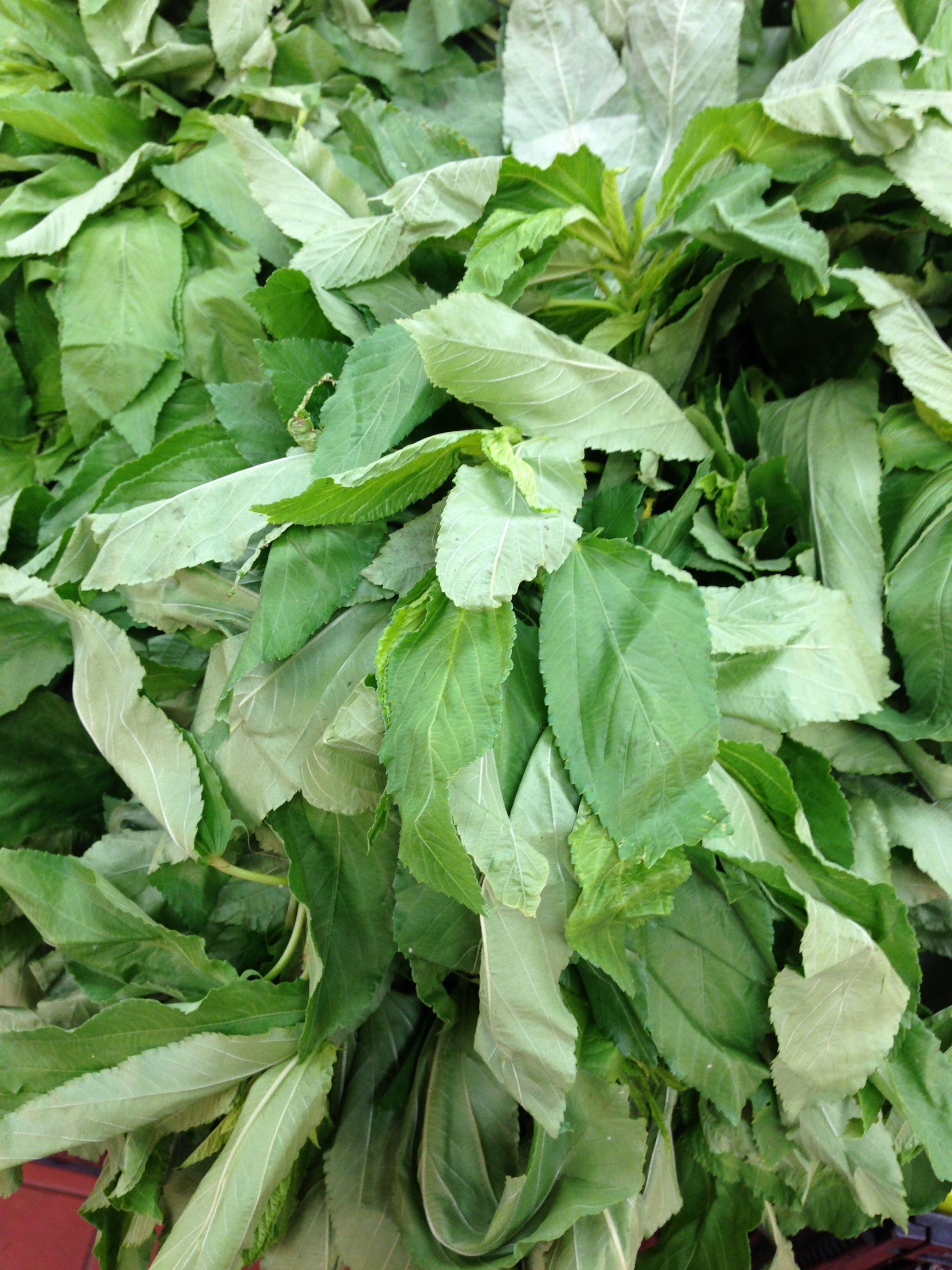 Fresh Molokhia (Okra Leaf)