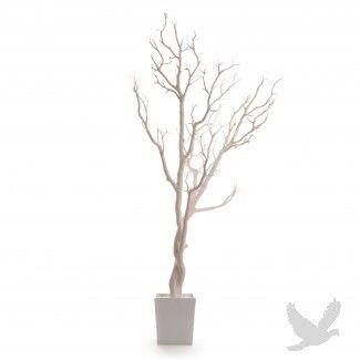 Manzanita Tree In Pot 3 Ft White 4 Trees Case
