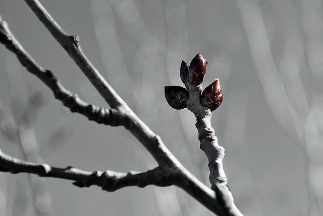 Imbolc - you may have to look closely, but the first signs of spring are there.