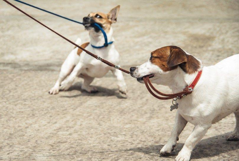 Train your Dog for Polite Leash Skills