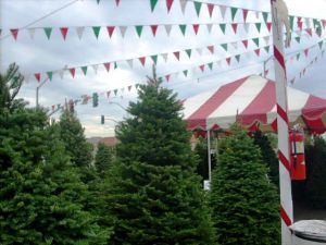 Christmas Tree Lots Compete For Holiday Business Christmas Tree Lots Christmas Tree Farm Christmas Tree