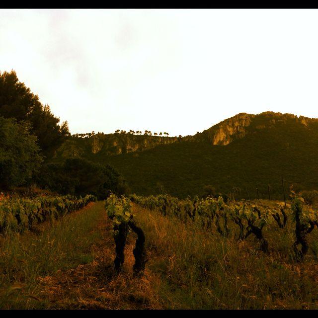 La Provence (France) et le vin!