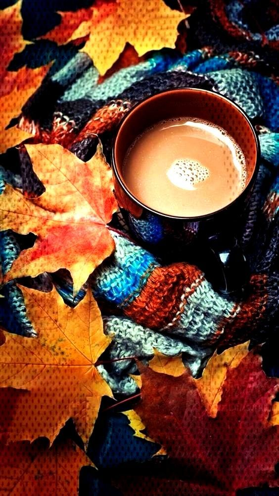 if you are not fond of autumn, this collection of fall iPhone wallpaper photos will give you more r