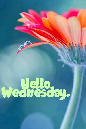 Hello Wednesday Images : hello, wednesday, images, Hello, Wednesday!, Happy, Wednesday, Quotes,, Morning