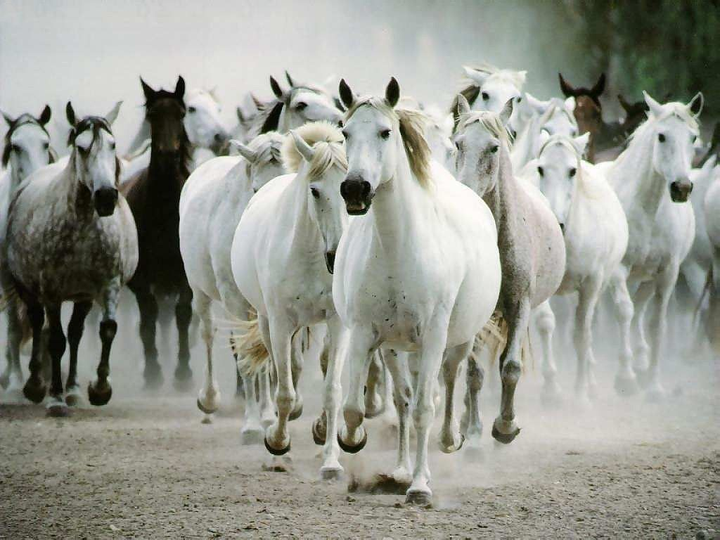 Must see Wallpaper Horse Stunning - 92b9f0cc44f8736314bbe41645ad89e0  Collection_465140.jpg