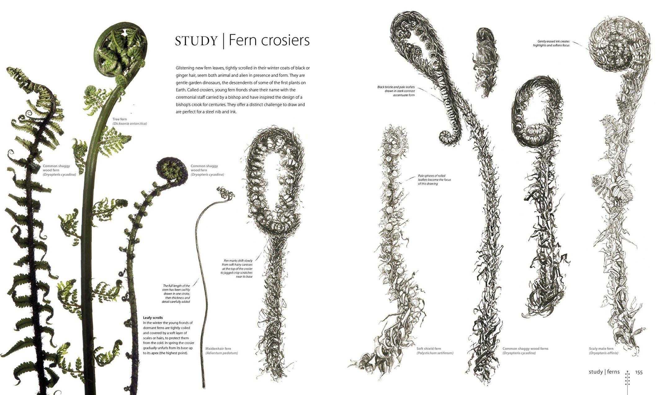 Contemporary Anatomy For The Artist Sarah Simblet Gift - Anatomy ...