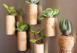 Fabriquer des mini-jardinières de frigo