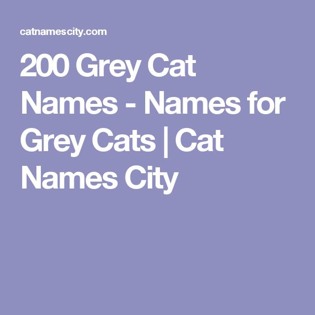 Grey Cat Names | Animals | Grey cat names, Grey kitten names