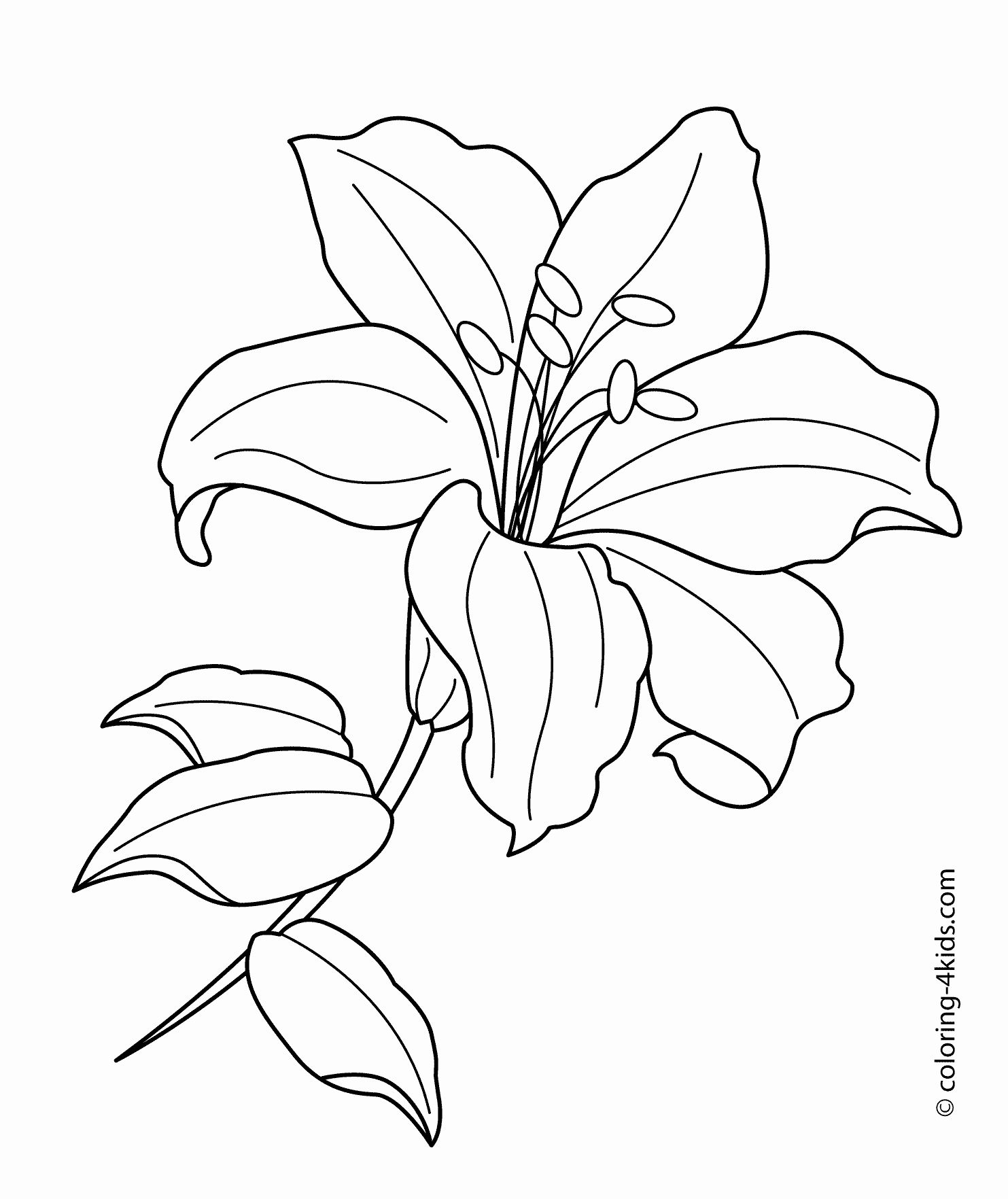 Easter Flower Coloring Pages in 2020 Lilies drawing