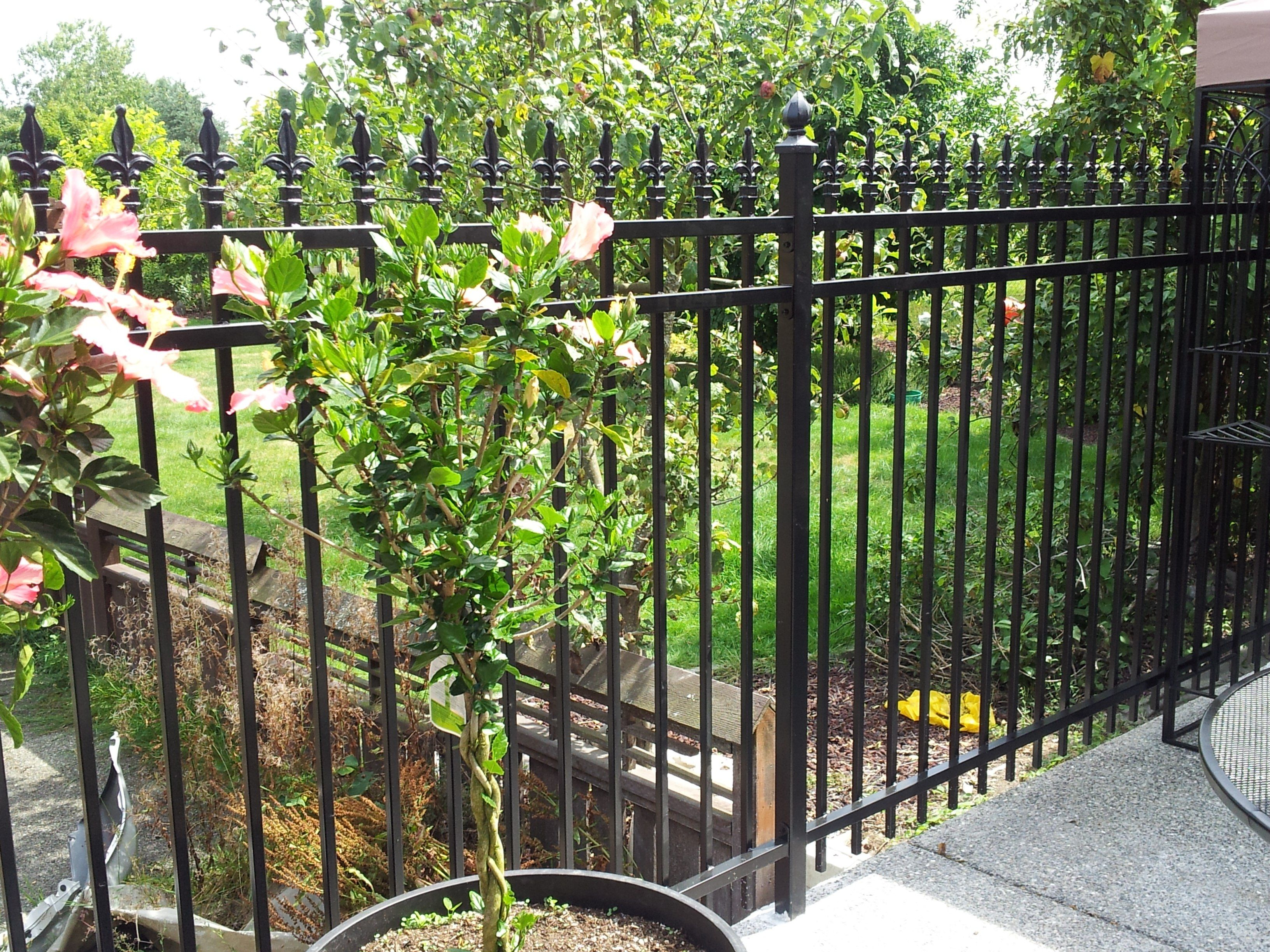 Wrought Iron Fence Plus Privacy Fence Prices Plus Privacy Fence